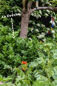 chloeka - tartinade à la livèche - mai 2015-7