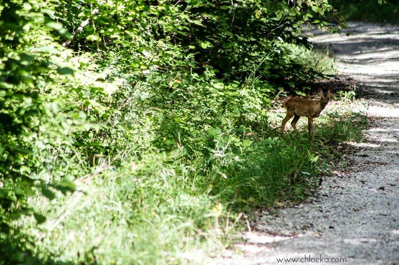 chloeka- vacances Montguers Drôme - randonnée à partir de St Auban sur l'Ouvèze 12 aout 2016-59