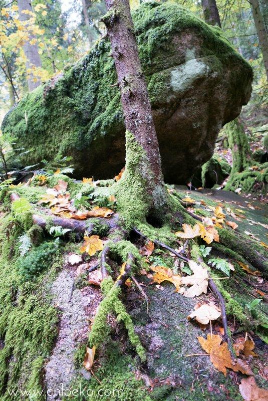chloeka-wiedenbach-wasserfalle-octobre-2016-12
