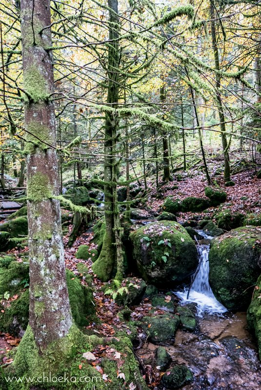 chloeka-wiedenbach-wasserfalle-octobre-2016-5